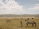 Zebras, Ngorongoro Crater, Tanzania